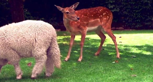 Runaway - Deer